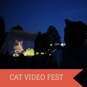 okc internet cat video fest 2016